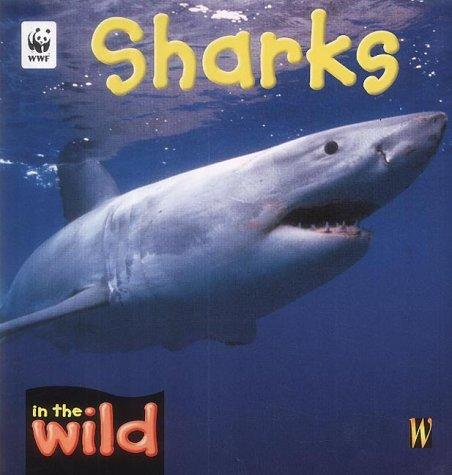 Sharks (In the Wild)