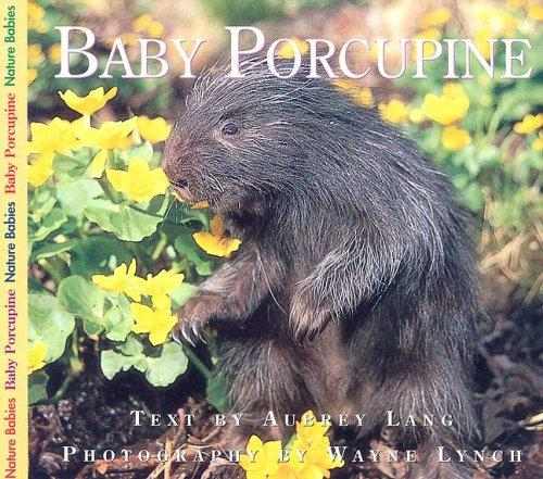 Download Baby Porcupine (Nature Babies)
