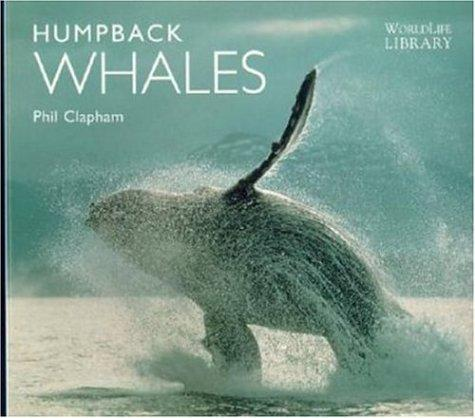 Humpback whales by Phil Clapham